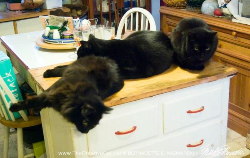 Smokie, Giuseppe and Mimi enjoy a well-deserved nap.