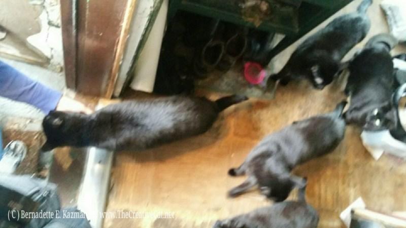 031516-Deana-Anthony-kitties3