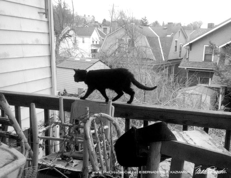 black cat on deck rail