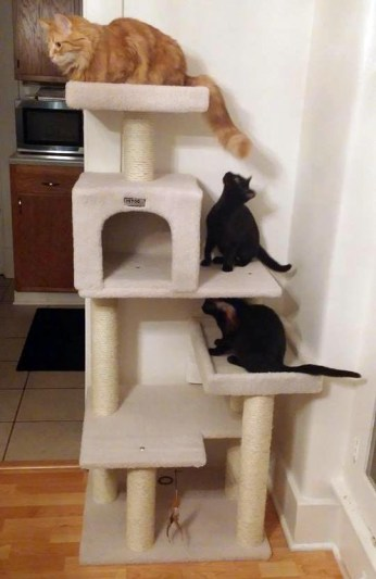 two black kittens and orange cat