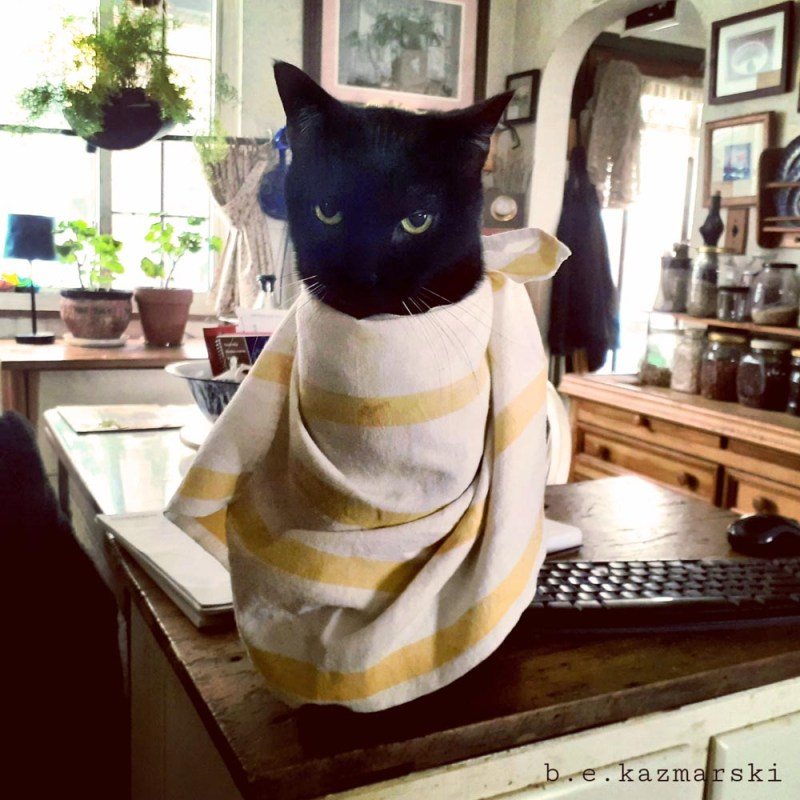 black cat with bib