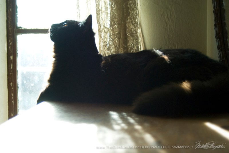 Smokie the sunworshipper.