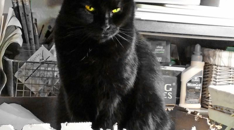black cat in green box