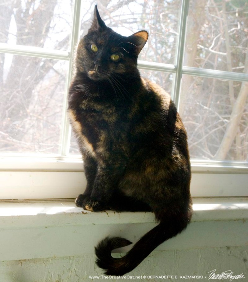 Sienna is enjoying her sunny windowsill.
