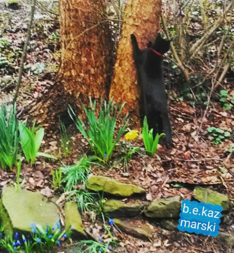 black cat scratching on trees