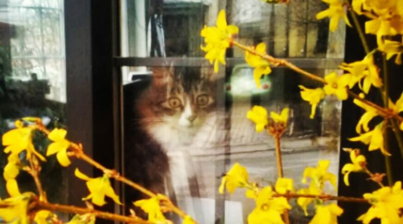 cat inside window