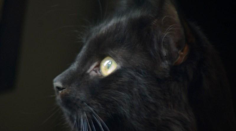Hamlet's handsome profile.