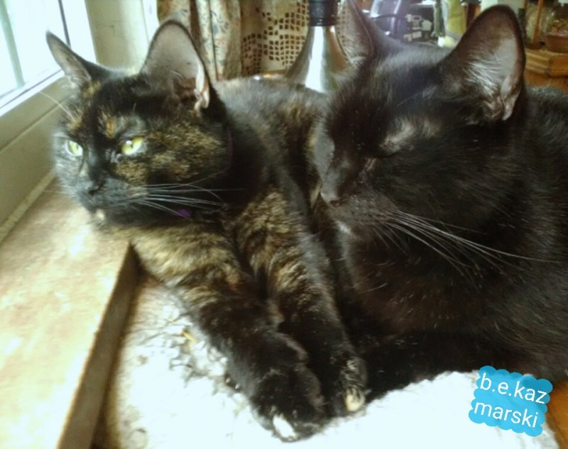 black cat tortoiseshell cat