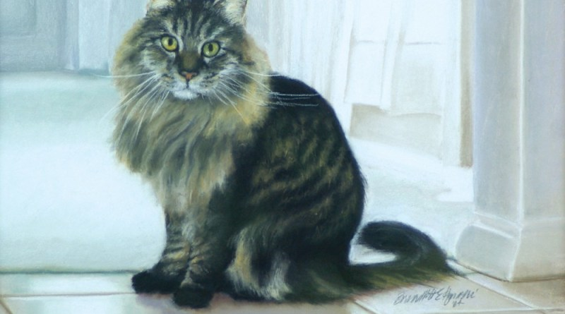 pastel portrait of main coon mix cat