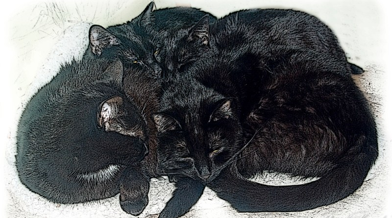 four cats sleeping
