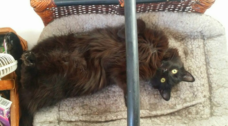 """Hamlet this morning. I touched the belly this time. Once they decided it was all """"okay"""" they are changing every day."""