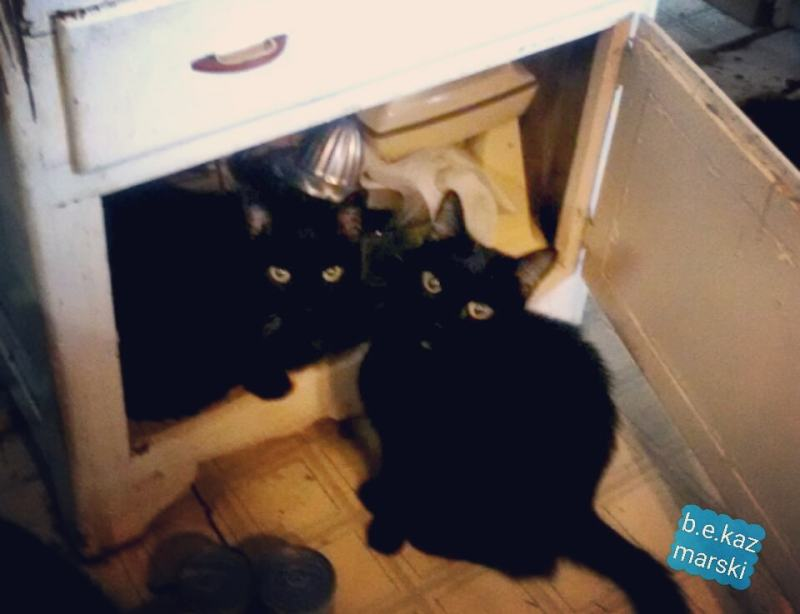 two black cats in cupboard