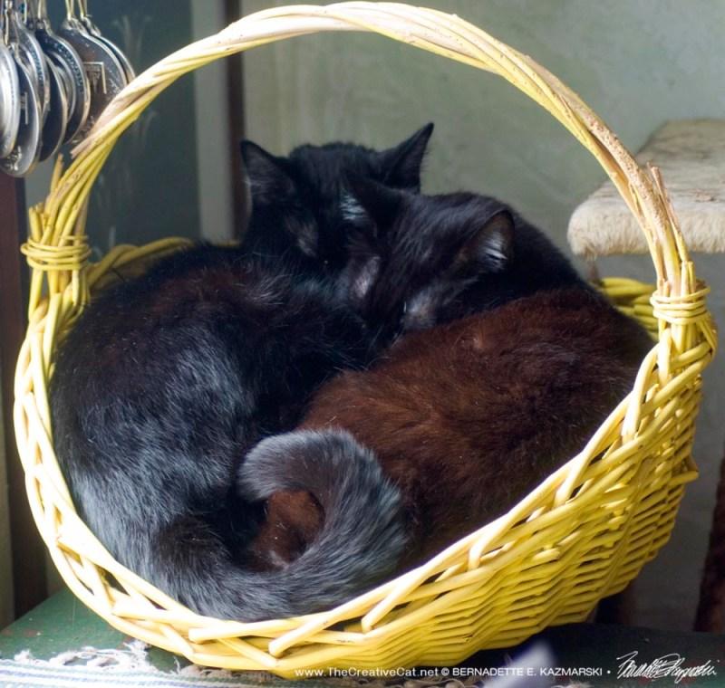 Yellow Basket Cuddles