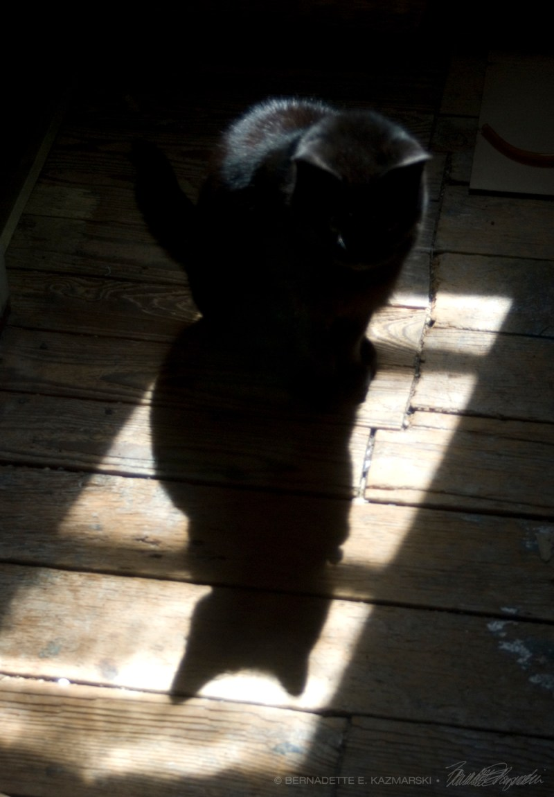 black cat with shadow on wood floor