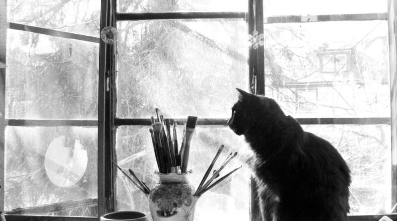 Studio Cat Basil