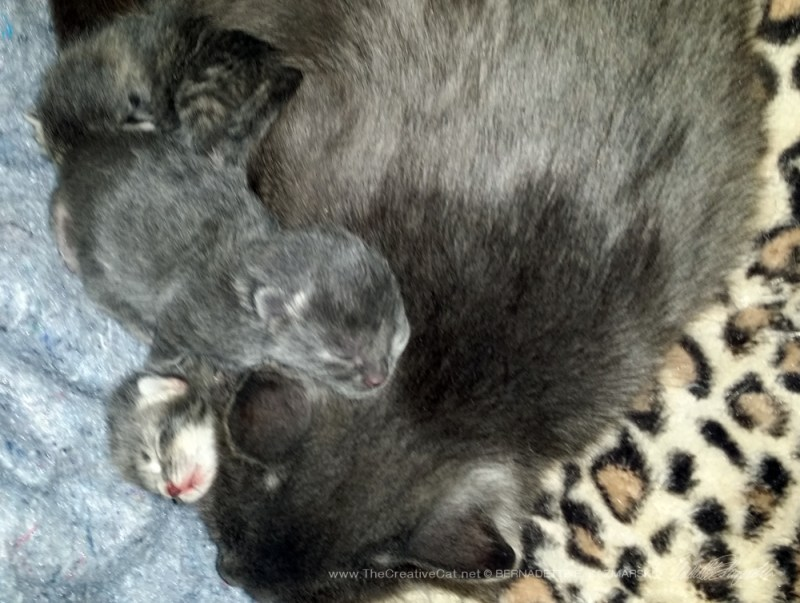 Happy mom cat with babies.
