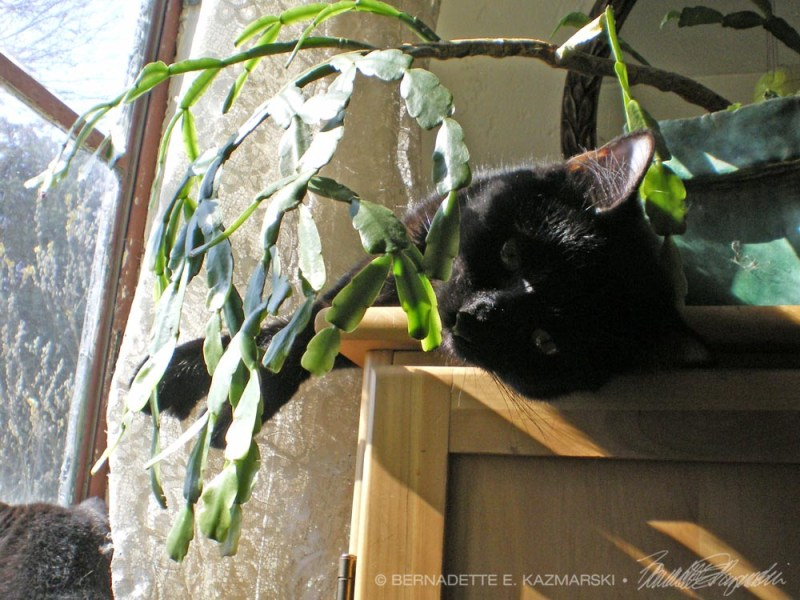 black cat with plant