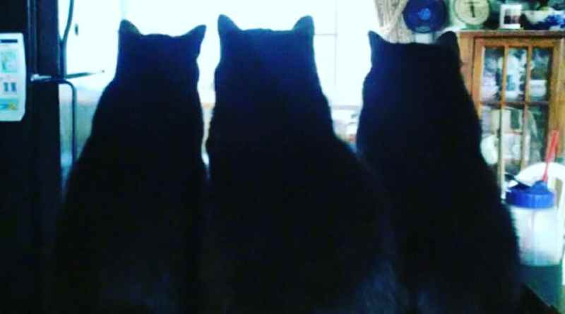 three black cat silhouettes