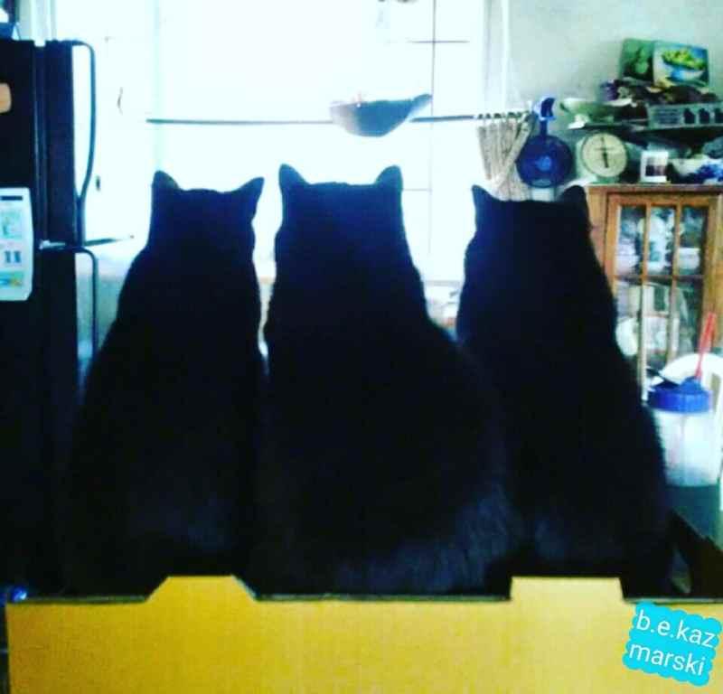 three black cat silhouettes