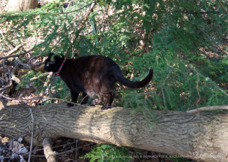 Stalking something along her tree.