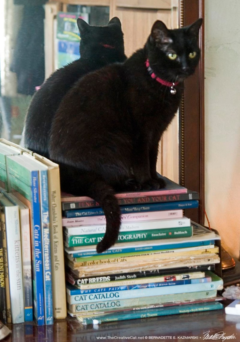 Keeping watch on the books.