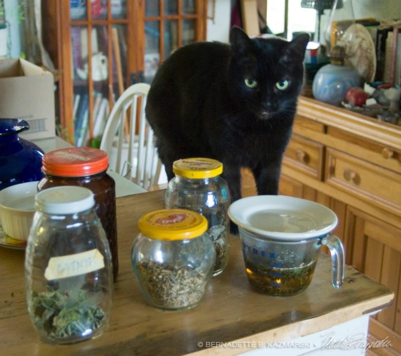 black cat with tea