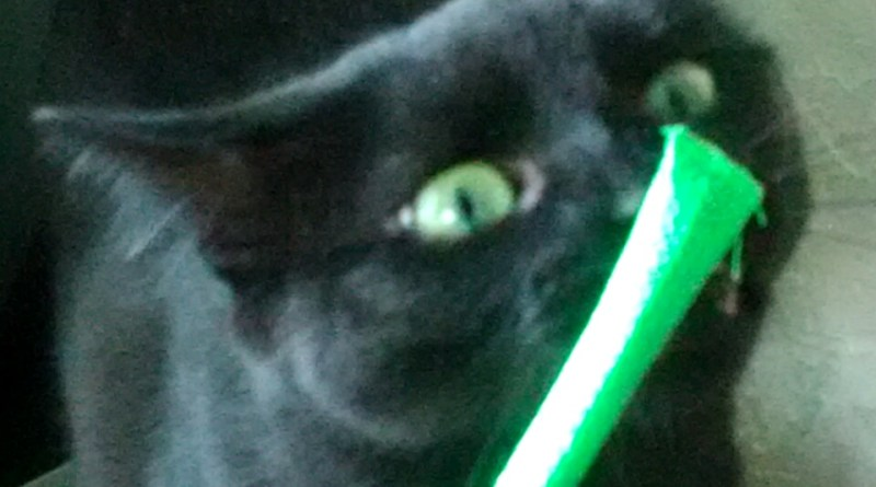 black cat with catnip