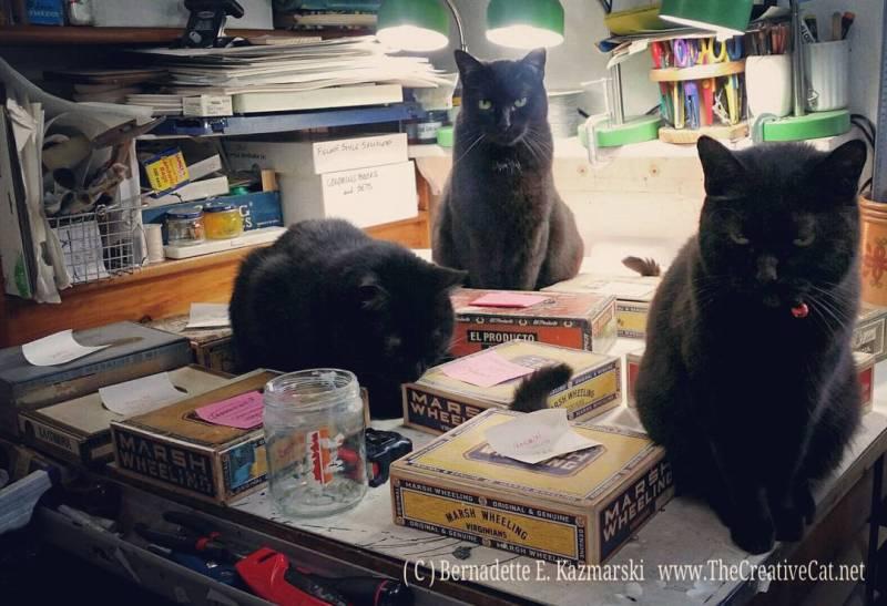 three black cats with cigar box keepsake boxes