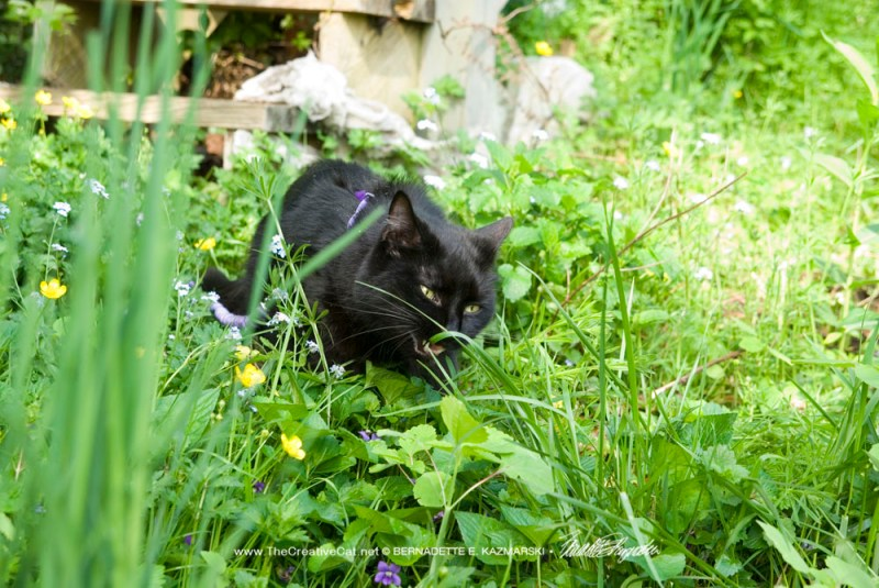 Mewsette successfully finds a tasty blade of grass and eats it.