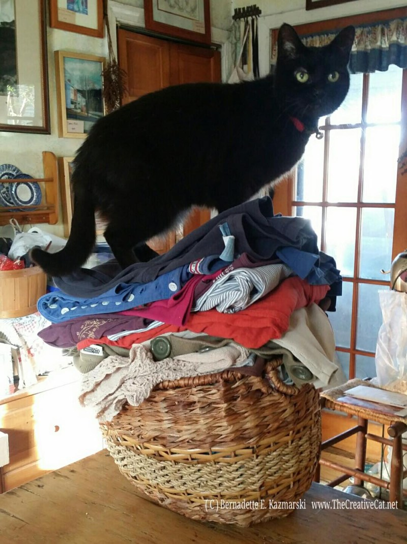 Mimi on the laundry
