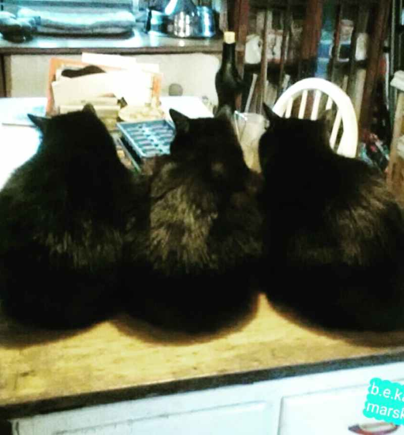 three cats from the back