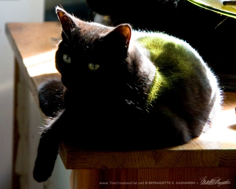 Bella basking in the sunlight.