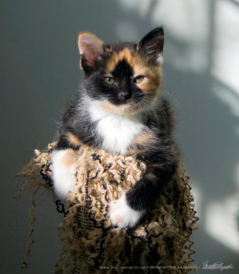 Iz adopted!