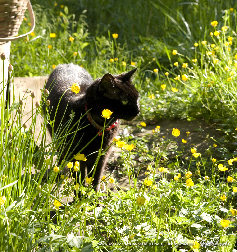 Daily Photo: Buttercups and Chives and Mimi