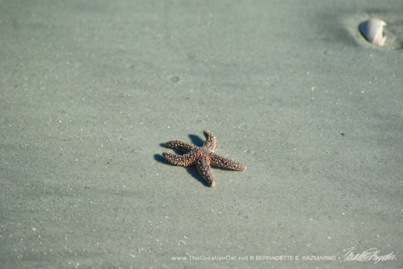 Go ahead and pick up that starfish.