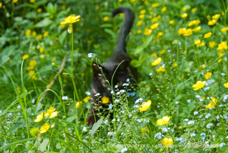 Cat In Backyard your backyard wildlife habitat: begin in spring to control fleas