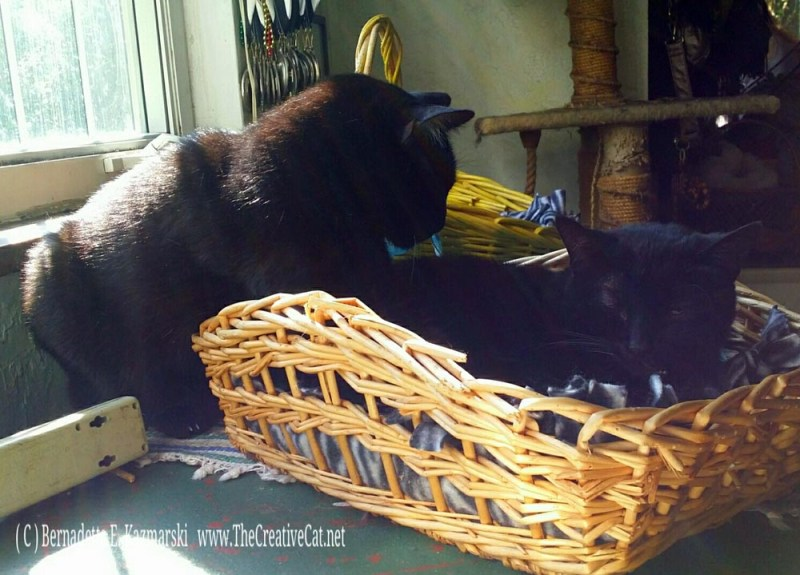 Bean in the Basket.