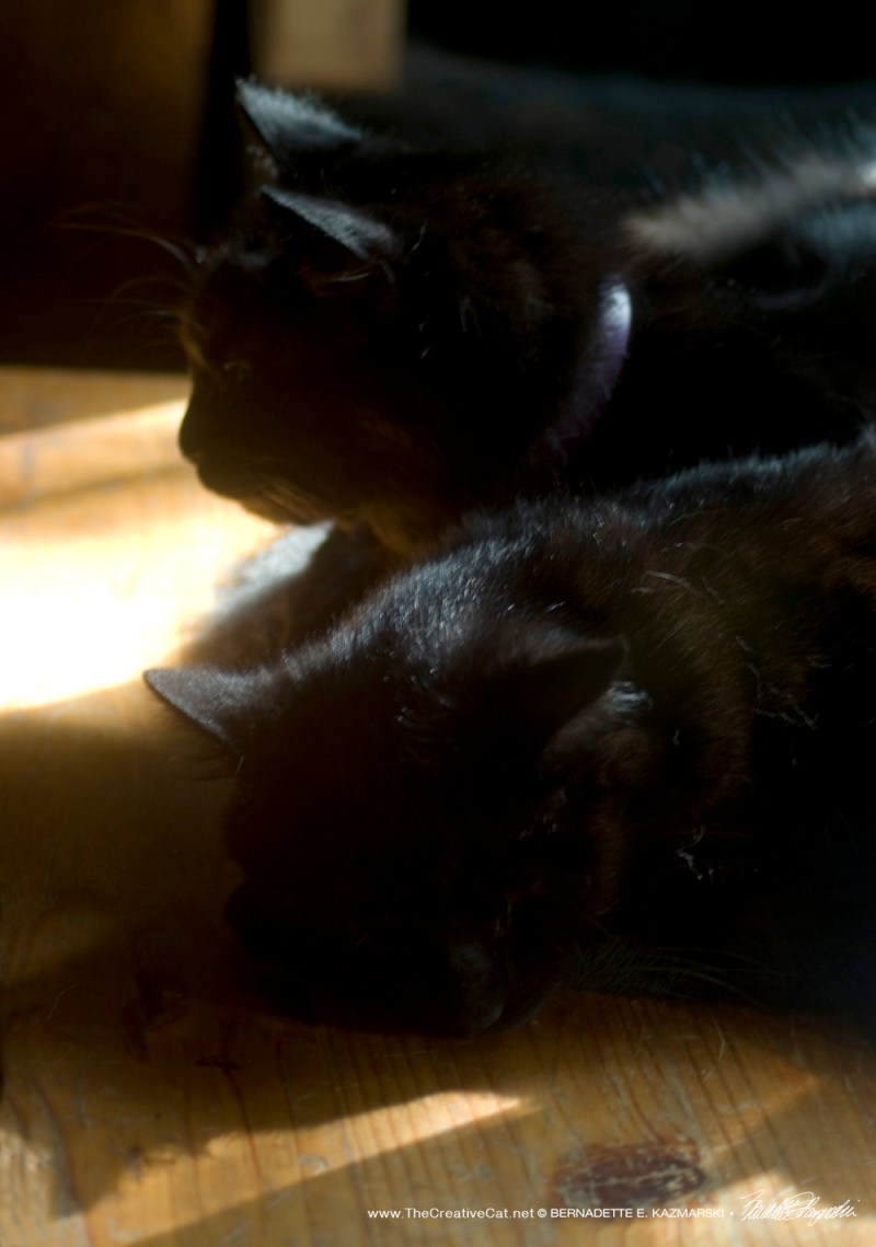 Basil and Bella have a good nap in the sun, on sunnier days.