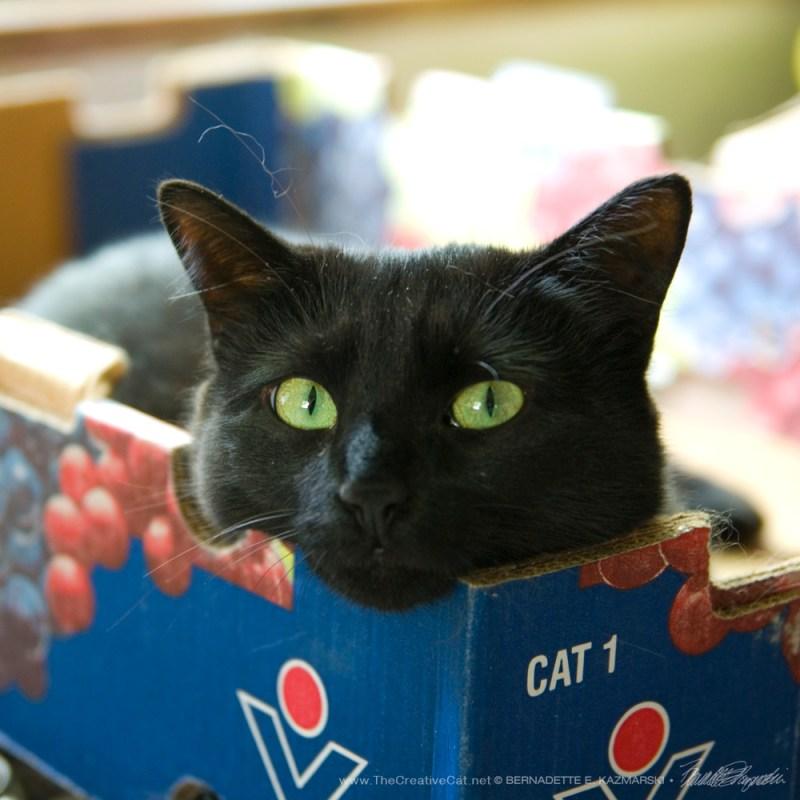 Bella in the grapes box.