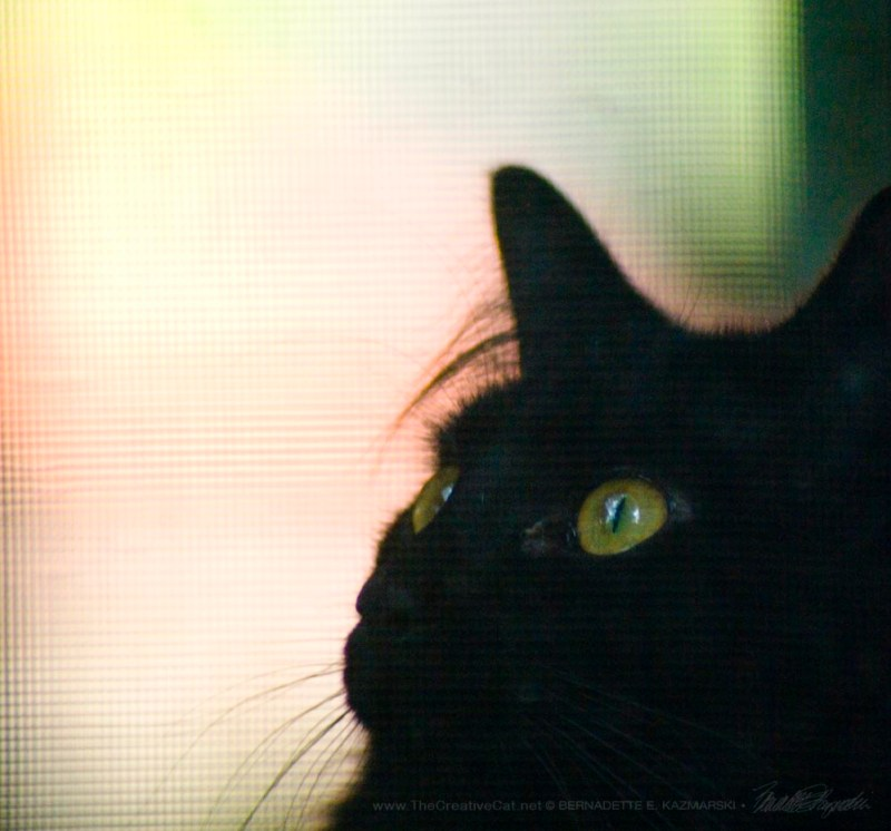 Basil watches the birds through the screen.