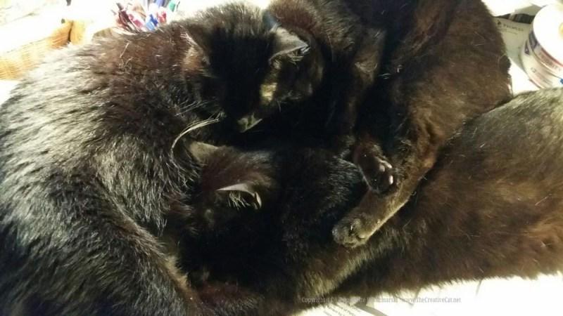 060515-CatsDesk5