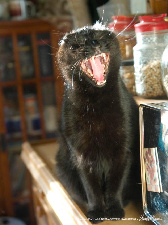 Sunshine's big yawn.
