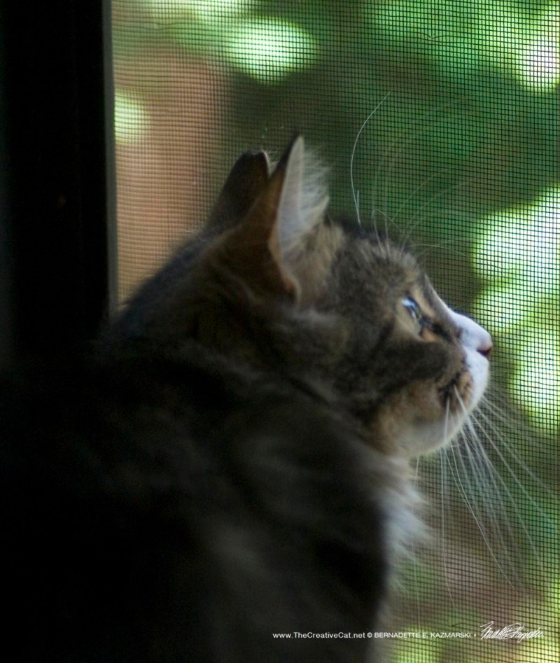 Mariposa watching the wrens.