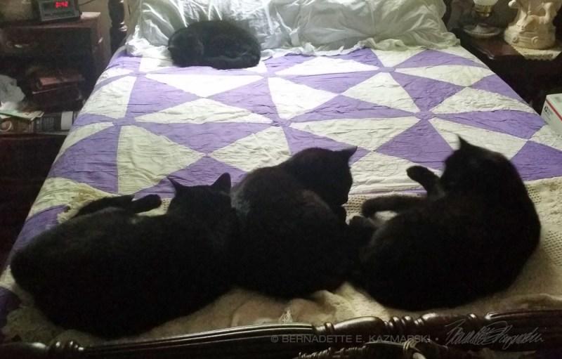 four black cas