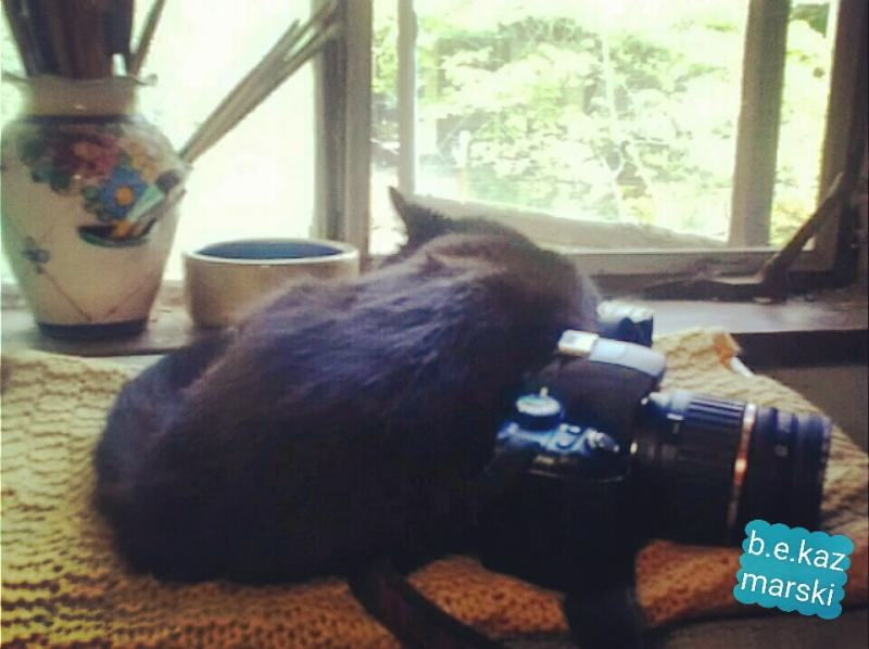 black cat sleeping with camera