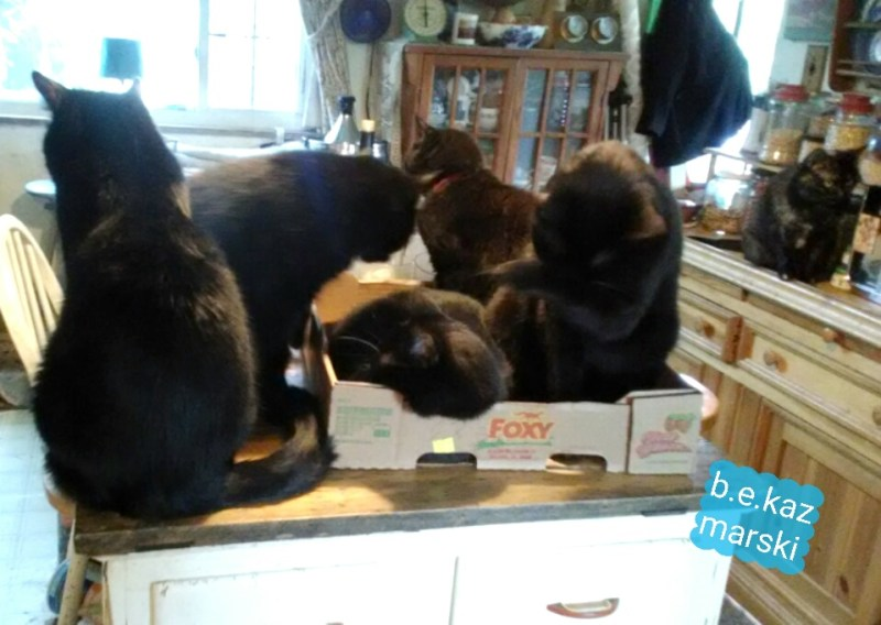 six cats in the kitchen