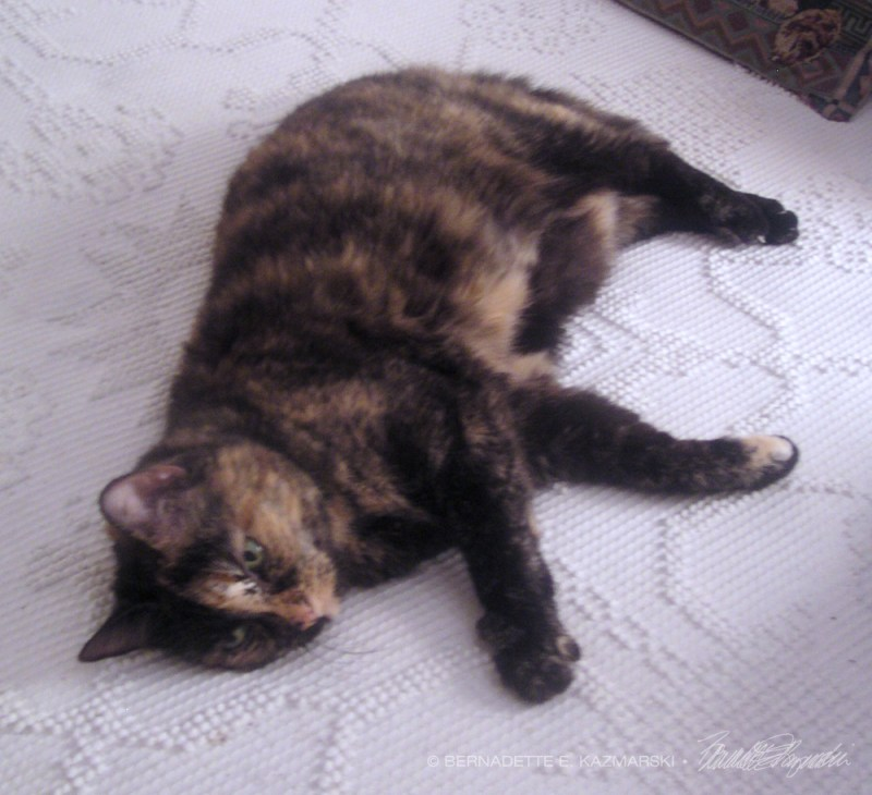 tortoiseshel cat on bed