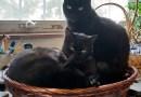 Maximum three cats.