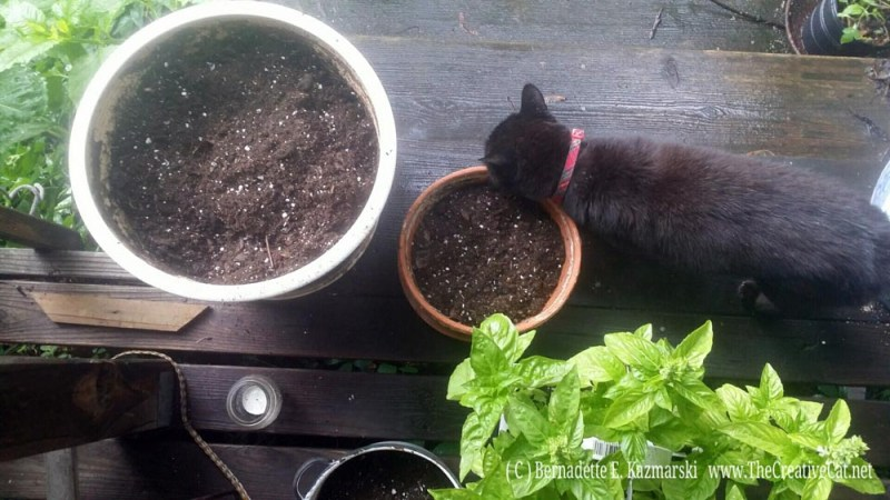 Mimi approves of the basil.