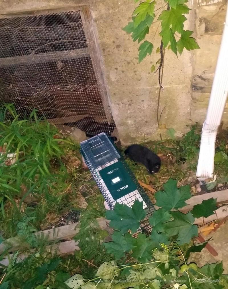 Two black kittens.